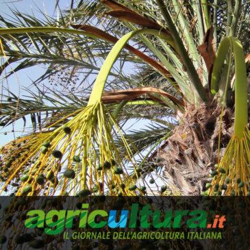 Promozione digitale della ricerca: su agricultura.it una rubrica dedicata al programma PRIMA