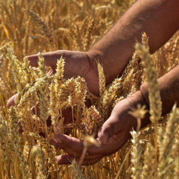 """Al via oggi suPOI""""#AgrifoodXRipartire"""": storie, innovazioni e imprese dell'Italia che riparte."""