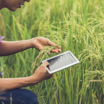 #AgrifoodXRipartire: da nord a sud dell'Italia, nasce il racconto dell'agroalimentare che riparte